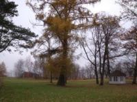 28.10.10 Сев. Эстония романтический парк Sakka